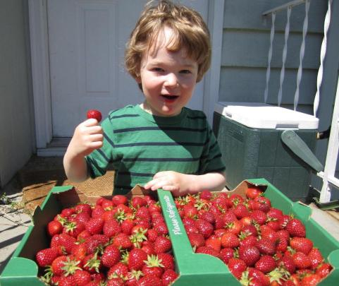 Colm with strawberries